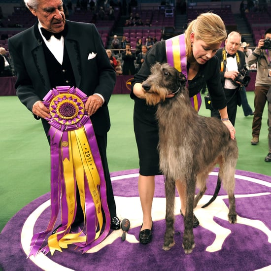 First-Time Westminster Dog Show Best in Show Winner Pictures