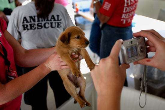 How You Can Help Furry Victims of Hurricane Ike . . .