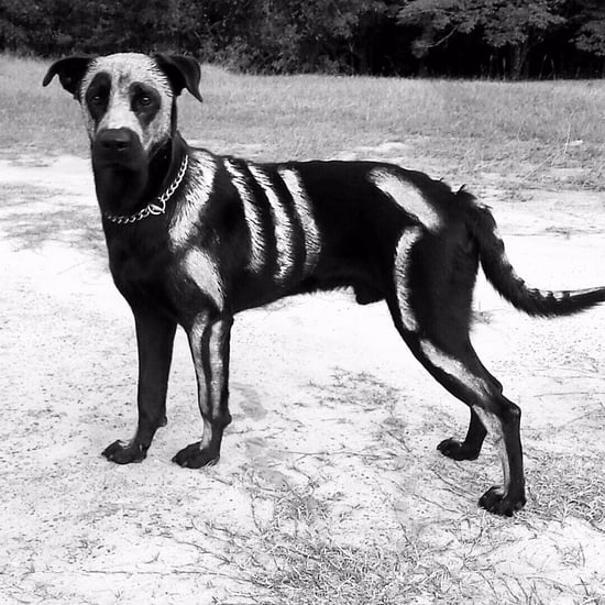 Painted Skeleton Halloween Costume For Dogs