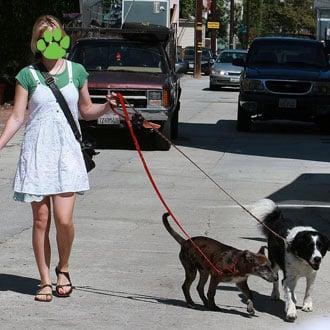 What Happened This Week on PetSugar (8/3-8/7)?