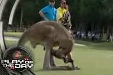 Kangaroo Thinks Interview Time Is Sexy Time