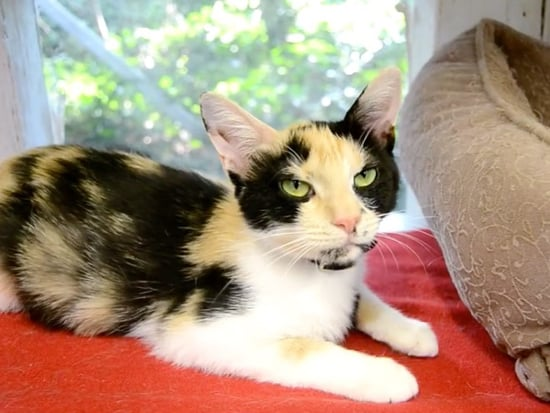 Adopt Me! Sylvia the Cat Would Bring Fun and Cuddles to Any Family