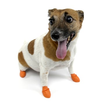 Unpadded PAWZ dog boots ($12–$16 for a pack of 12) protect your pup's tootsies without making him feel like he's walking on the moon.