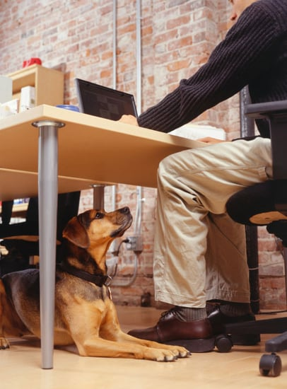 Pet-Proofing Your Home: Tech Edition
