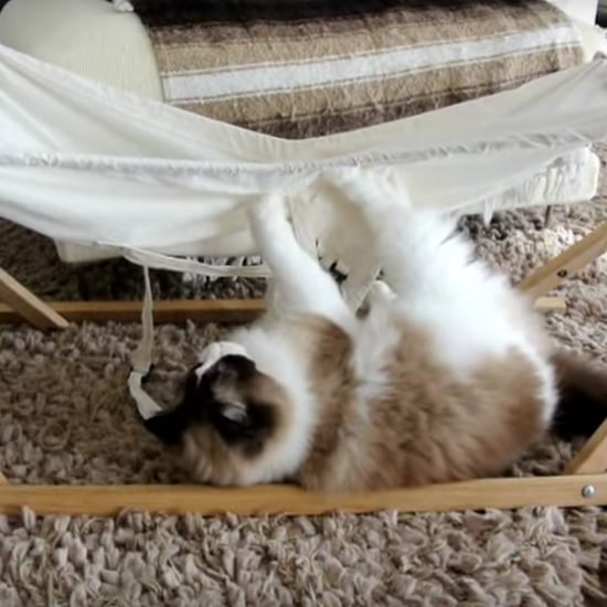 Cat Falling Out of Hammock   Video