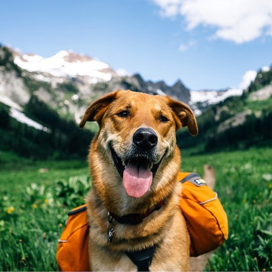 Photos of Dogs Camping