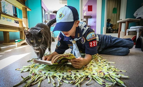 The Good Mews Shelter Helps Kids and Cats Through Reading