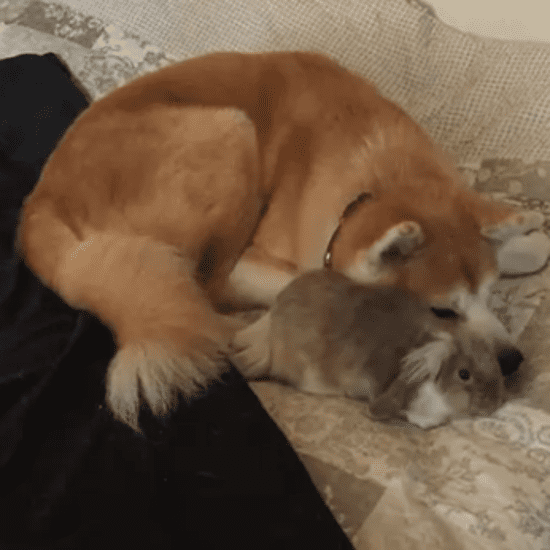 Dog and Bunny Friends | GIF