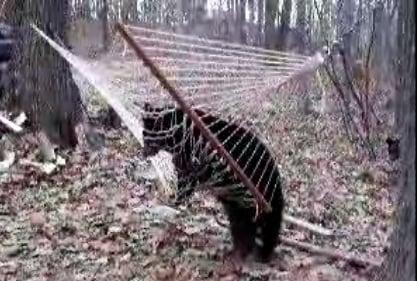 Bear Tries To Sneak A Snooze