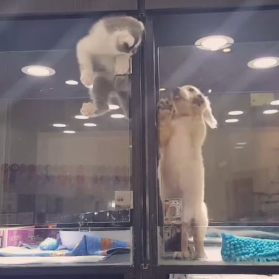 Kitten Escapes Cage to Play With Puppy | Video