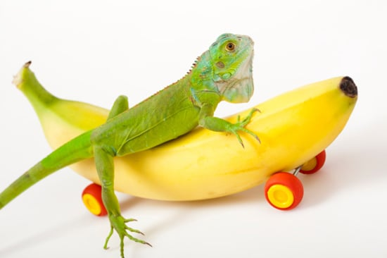 Have You Ever Owned a Reptile or Amphibian?