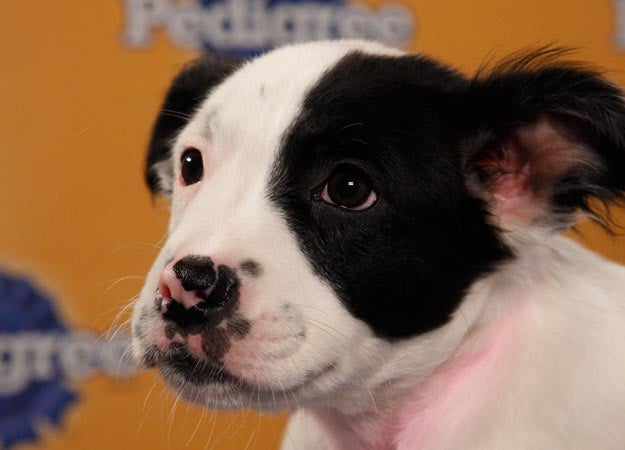 Looks like Hollie, a border collie mix, has a nose for trouble. Source: Animal Planet