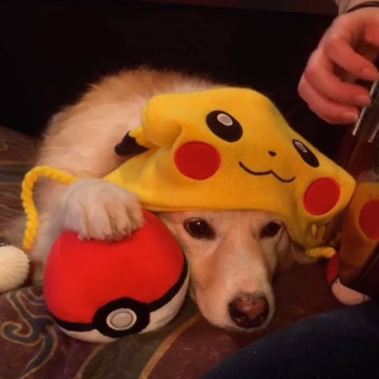 Dog Not Impressed With Pokemon Theme Song | Video