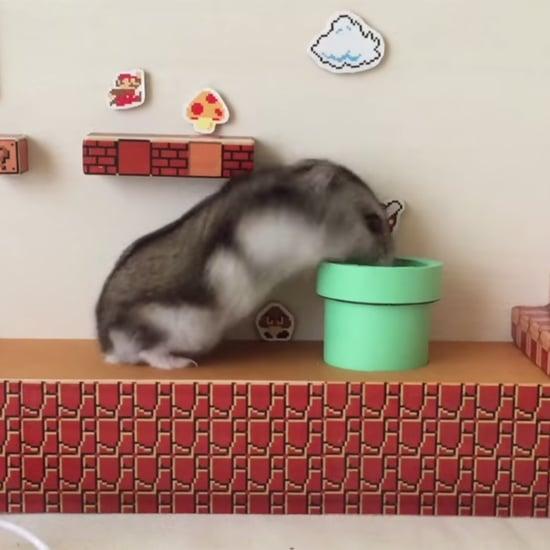 Hamster Goes Through Super Mario Bros Maze