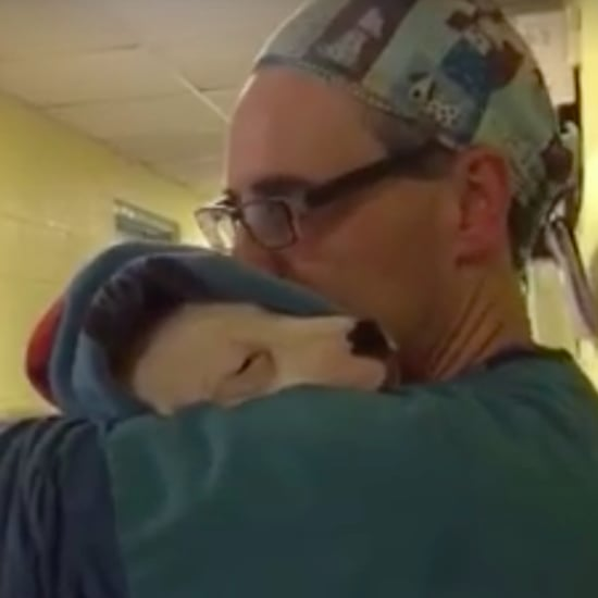 Veterinarian Assistant Comforting Dog After Surgery | Video