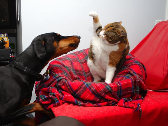 How to Deal With Your Pets Fighting