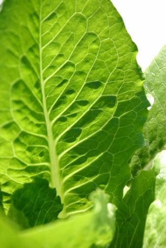 E. Coli Outbreak Prompts Multi-State Lettuce Recall