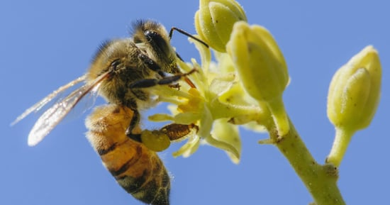 Major Pest Control Company Announces A Huge Change To Protect Bees
