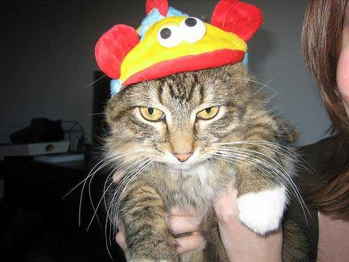 The Cat in the Hat . . . Literally