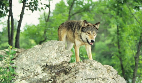 The Scoop: How Dogs (and Wolves) Pick Potty Places