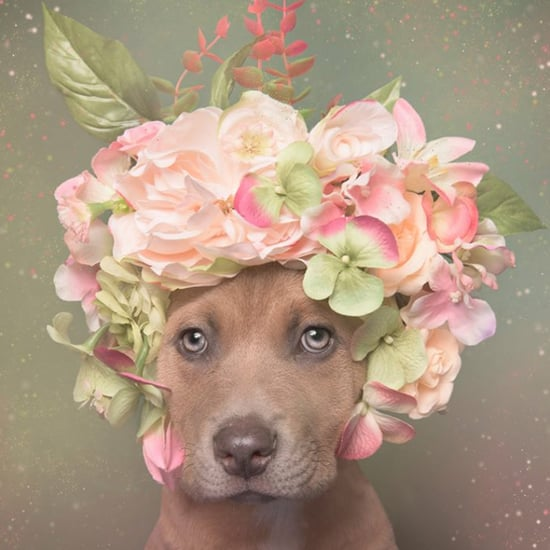 Pitt Bull Dogs Wearing Flower Crowns