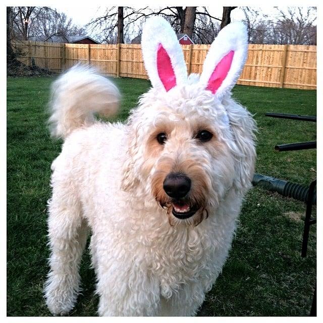 Where's the Easter Egg Hunt?