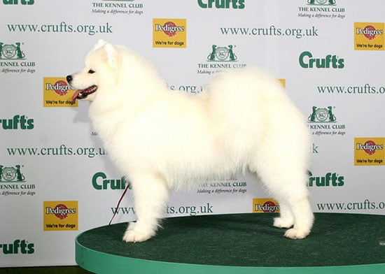 2008 Crufts Winners: Hound, Pastoral, Working, and Terrier Group