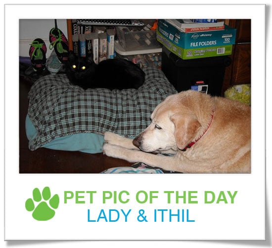 Pet Pics on PetSugar 2009-04-13 09:25:00