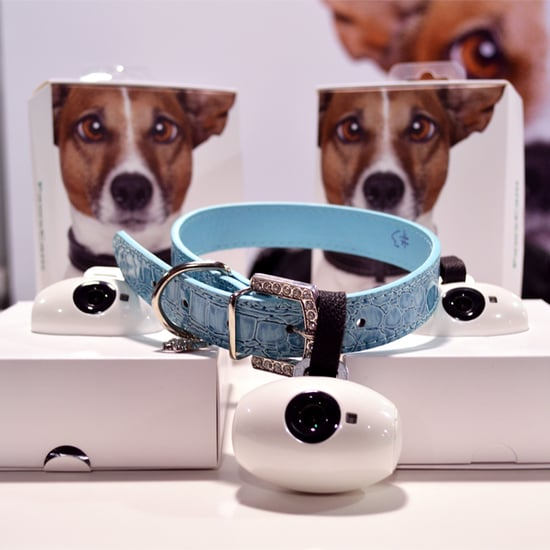 Best Pet Gadgets 2016