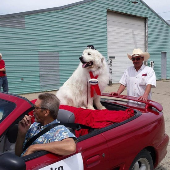 Dog Elected Mayor of Cormorant Township‬, Minnesota