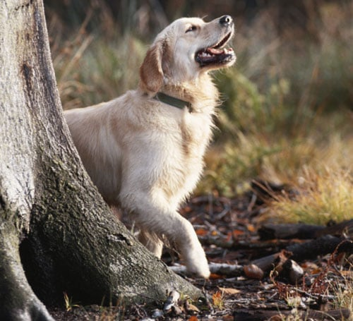 Dog Days of Summer: What Is Lyme Disease Anyway?