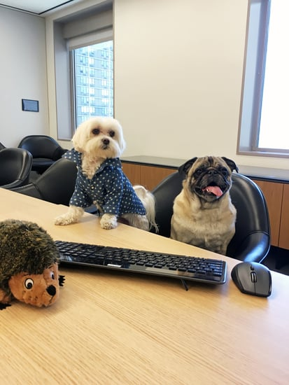 See How People Are Celebrating Take Your Dog to Work Day