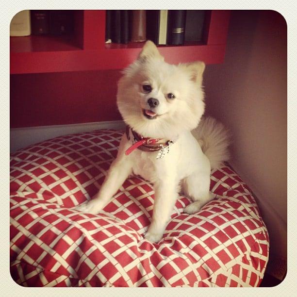 Comfy Bed, Happy Pom