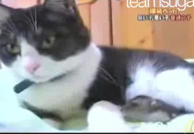 Genetically Altered Mice Not Afraid of Cats