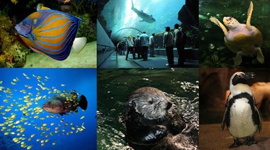 Out and About: Georgia's Georgia Aquarium