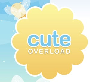Website Of The Day: CuteOverload