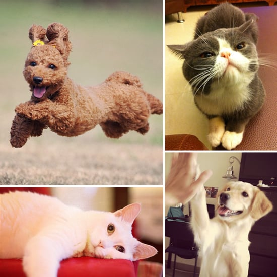 5 Dogs Who Are Totally Amused . . . and 5 Cats Who Are Totally Not