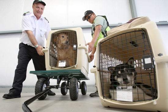 How Have Your Furry Friends Flown the Friendly Skies?