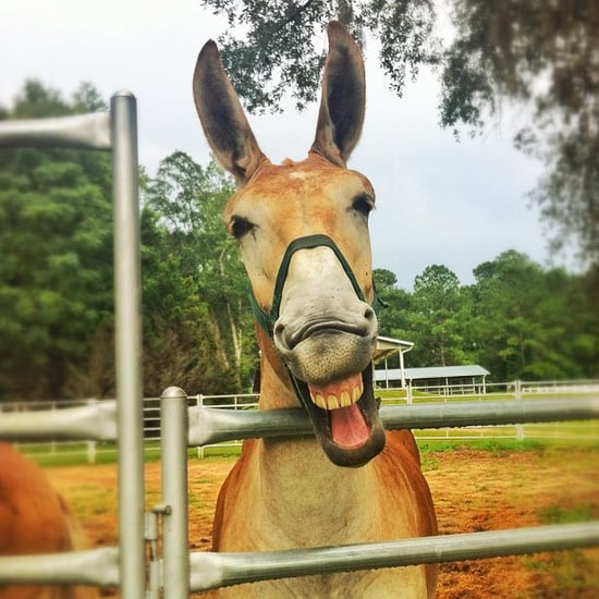 Fun Facts For National Mule Day | Pictures