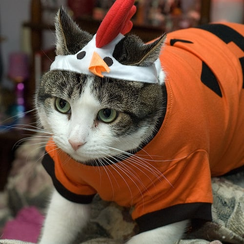It's the Great Pumpkin Chicken!