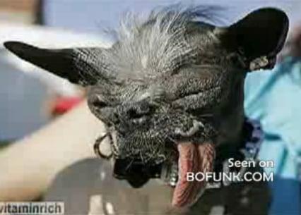 Introducing Elwood: The World's Ugliest Dog