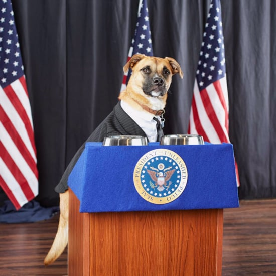 Presidential Puppy Podium From Petco