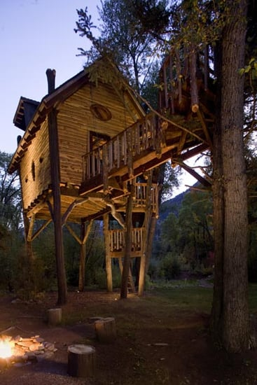 Would You Live in a Tree House?