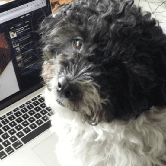 Imgur For Pets April Fools' Day Prank