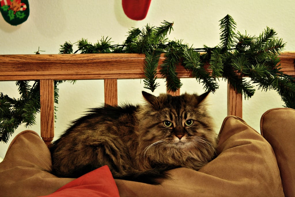 Your couch? Humbug! Source: Flickr User kellykeeton