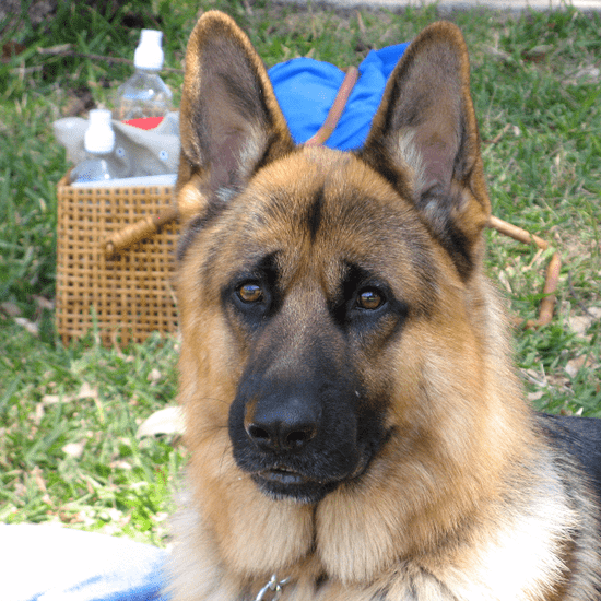 Summer Barbecue Tips For Dogs