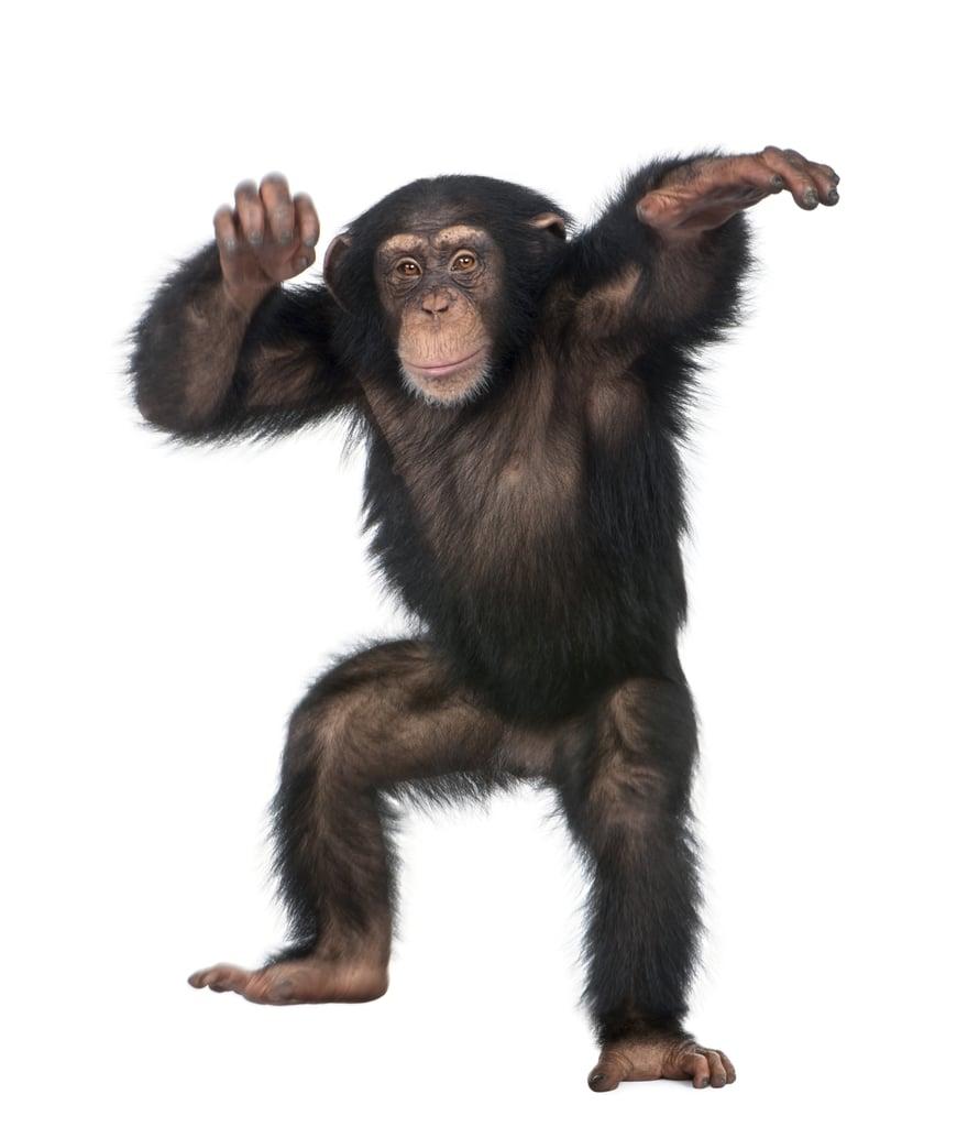 Chimp Dance