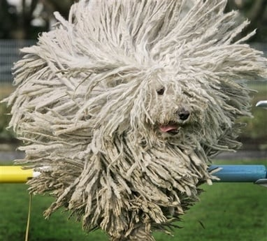 Honey, Have You Seen My Mop Anywhere?
