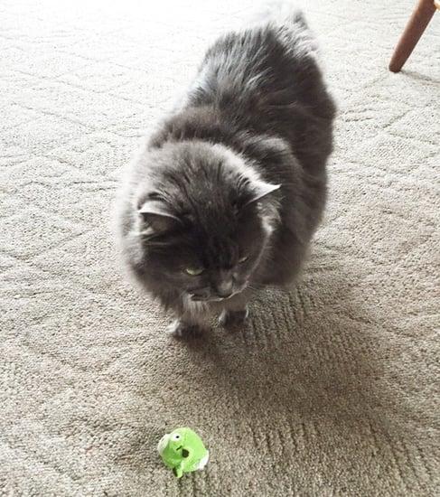 5 Ways My Senior Cat Has Become Lazy(er)