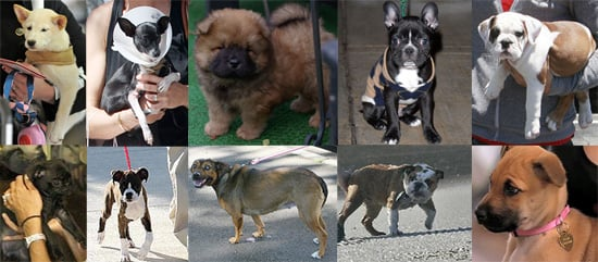 Who's the Celebrity Puppy of the Year?